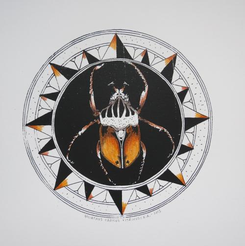 goliathus-cadicus-vitrivus