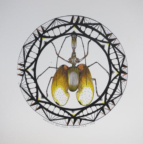 mormolyce-phyllodes-vitrivus