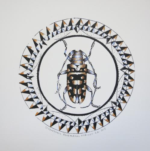 sternotomis-bohemanni-vitrivus